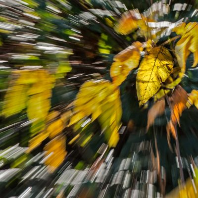 Een struik in Friesland. Zoomen tijdens de opname